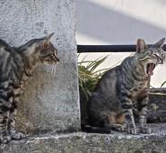 i due gatti